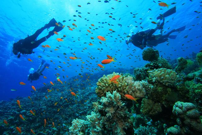 buceo debajo del mar